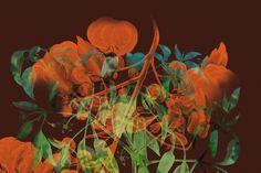 Chevalvert | design graphique, typographique et numérique #flower #nature