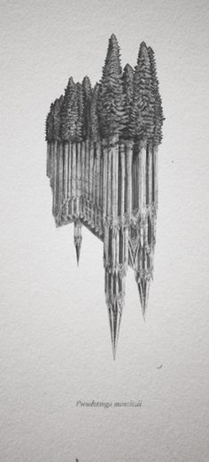 Evan Wakelin's drawings and stuff #forest #trees #illusion #cathedral #dom #old growth #koln #douglas fir
