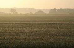 All sizes | Field - Sunny Morning | Flickr - Photo Sharing! #photography #landscapes #green