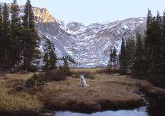 Ein Hund sitzt auf einer Wiese vor einem Gebirge.
