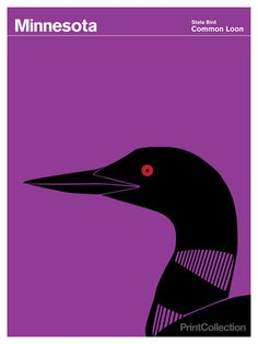 Minnesota #loon #red #common #black #purple