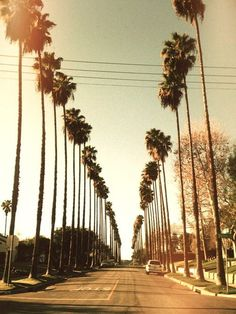 Along streets paved with gold #palm #trees
