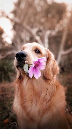 The flower and the dog photo by Celine Sayuri Tagami (@celine_sayuri) on Unsplash