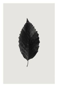"""Saatchi Art Artist Anders Bundgaard; Photography, """"Hornbeam"""""""