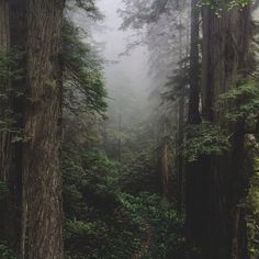 wanderthewood:Del Norte Coast Redwood State Park, California by Kevin Russ