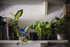 _38Q8390 #photo #plants #studio #green