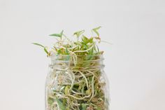 Home Sprouting Guide KINFOLK #food