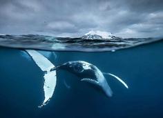Arctic showtime by Audun Rikardsen