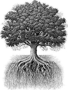 Oakbranchestoroots.jpg (305×400) #tree