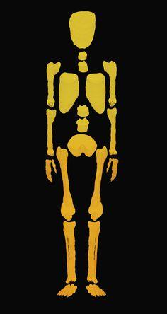Bones / Print Illustration #design #illustration #bones #skull