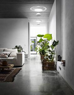 image #plant