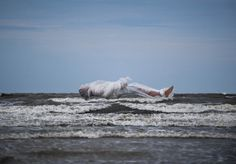 Floating by Andrew Brodhead #inspration #photography #art