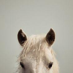 horse #horses #sears #horse #pony