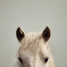 il_570xN.259632148-550x550.jpg (550×550) #horses #sears #horse #pony