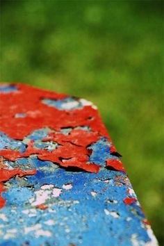 Tumblr #field #red #grass #depth #of #color #paint #photography #blue #table #green
