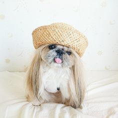 The Most Fabulous Derpy Dog Hair on Instagram #instagram #CuteDogs #Animal #photography