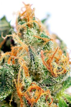 Wall-B World Wild #ganja #marijuana #smoke #weed #colour