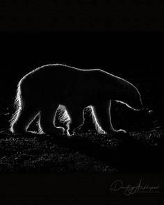Fine Art Wildlife Photography by Dmitry Arkhipov