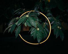 Magnus Åström | PICDIT #plant #leaves #leaf #tree #foliage #botany