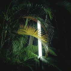 palm and light