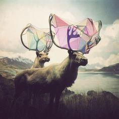 Ilustración #illustration #design #deer