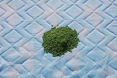 All sizes | museum peas | Flickr - Photo Sharing! #peas #photography #bed #blue #green