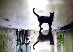 Photography by Gilad Benari | Cuded #photography #gilad benari