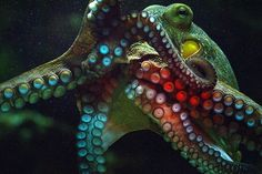 DeadFix · #octopus