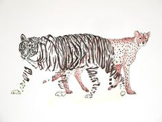 Amazing Hand Draw Animals illustrations by Jaume Montserrat