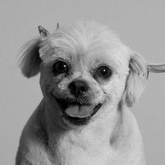 Lola | Flickr - Photo Sharing! #photography