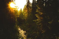 Circa 1983 - The Photo Roll of Owen Perry #photography #sunlight #forest #sunset #trees #creek