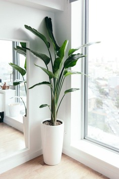 Newest Indoor Plants Decor Ideas For Your Apartment 01