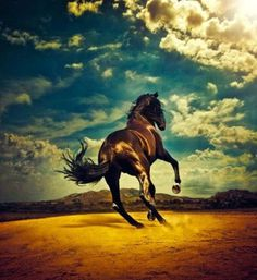 img33.jpg 500×545 pixels #horse #mountains #sky