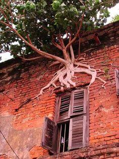 img_4794.jpg 600×800 pixels #tree #plant