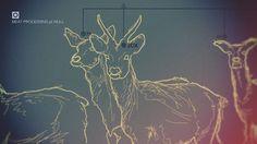 Shrani.si - Brezplačna spletna shramba za vaše slike - fetis2.jpg #design #infographic #illustration #deer #reindeer