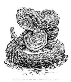 PROTEGIENDO LO QUE AMO... on Behance https://www.behance.net/gallery/20640219/PROTEGIENDO-LO-QUE-AMO #negro #ink #white #blanco #and #pintura #sadik #rose #mexico #guanajuato #serpiente #y #black #snake #engraving #engrave #vibora #textura #grabado #ilustracion