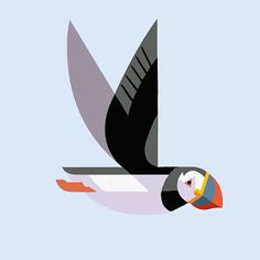 Atlantic Puffin by Josh Brill #icon #iconic #picto #illustration #animal #bird #puffin
