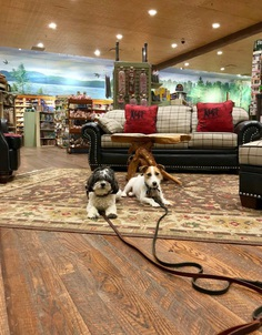 Most Dog Friendly Stores in America - Bass Pro Shop