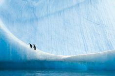 I ghiacci di Paul Nicklen: fotografia naturalistica - Fotografia Artistica Blog G.Santagata #photography #penguins
