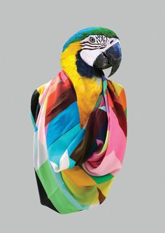 Varia — Design & photography related inspiration #scarve #color #bird #scarf #colorful #animal