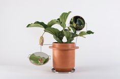 dossofiorito magnifies their love for plants with the phytophiler #mirrors #smoke #and