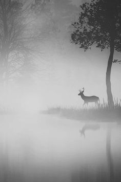 Beautiful Stag #beauty #deer #white #fog #cold #black #calm #mist #stag #photography #spooky #and #winter