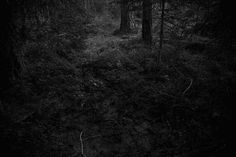 The Forest by Ken Rosenthal #inspiration #white #black #photography #and