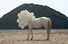 Claustrophobically Agoraphobic #photography #horse #balloons