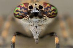 7437756-lg.jpg (935×626) #insect #closeup #bug #macro