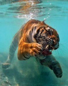 Technosoul #tiger