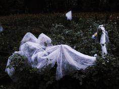 `agnieszkaicel #polish #photographs #fairy #autumn #garden