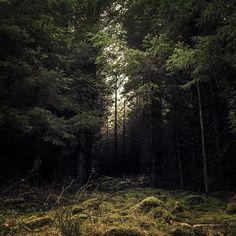 Wicklow Forest, Ireland