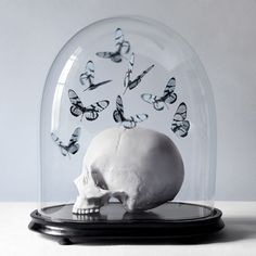 Histoires Naturelles on Behance #butterflies #skull #dome