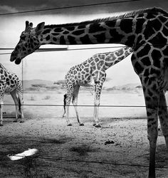 Black and White Photography by Andrea Alessio